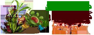 فروشگاه دنیای گیاهان گوشت خوار