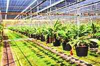 گلخانه پرورش گیاه حشره خوار