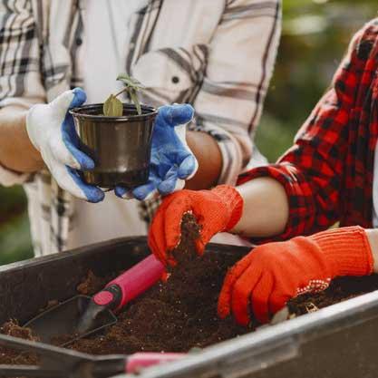 کاشت بذر گیاهان گوشتخوار - دنیای گیاهان گوشتخوار