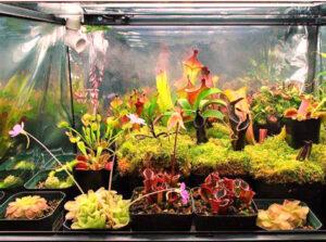 تراریوم گیاهان حشره خوار - دنیای گیاهان گوشتخوار