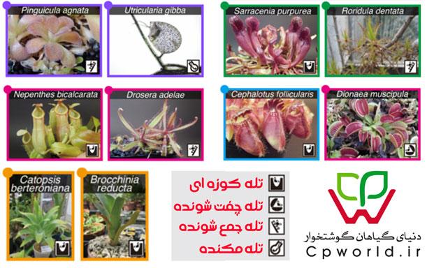پیدایش و تکامل گیاهان حشره خوار